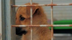 Droevig puppy in schuilplaats achter omheiningswachten dat aan nieuw huis worden moet gered en worden goedgekeurd Schuilplaats vo stock videobeelden