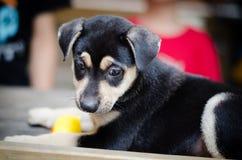 Droevig puppyportret royalty-vrije stock afbeeldingen