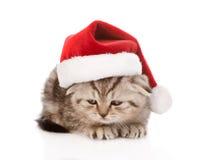 Droevig Schots katje met rode santahoed Op wit Stock Foto's