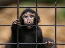 Droevig weinig aap stock foto