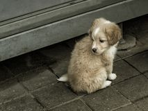 Droevig weinig hond stock afbeeldingen