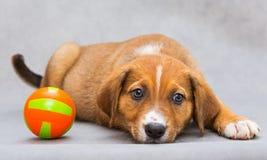 Droevig weinig puppy met bal Royalty-vrije Stock Afbeeldingen