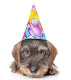 Droevig wire-haired tekkelpuppy in verjaardagshoed Geïsoleerd op wit royalty-vrije stock foto