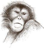 Droevige aap stock illustratie
