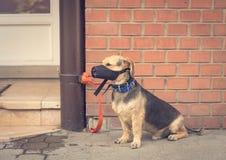Droevige bastaarde hond die op eigenaar wachten Stock Foto