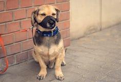 Droevige bastaarde hond die op eigenaar wachten Stock Afbeeldingen