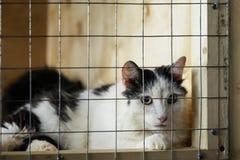 Droevige dakloze alleen kat, die kijkend met hoop van rooster die van cel, op eigenaar met huis wachten kijken Concept het mensdo stock afbeeldingen