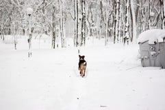 Droevige Dakloze hond Stock Foto