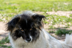 Droevige de hond ziet eruit Royalty-vrije Stock Fotografie