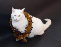 Droevige dikke witte kat met gele ogen die op bl zitten Stock Afbeeldingen
