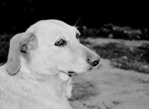 Droevige eenzaamheid van een hond stock afbeeldingen