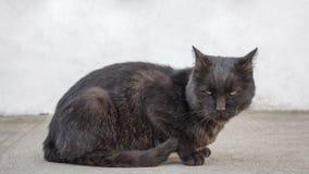 Droevige en gedeprimeerde verdwaalde zwarte kat die verdacht iets bekijken Verlaten kat met vuil in mond die troosteloos kijken stock foto's