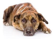 Droevige gemengde rassenhond Geïsoleerdj op witte achtergrond Stock Foto