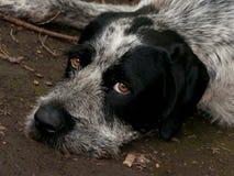 Droevige hond. stock foto's