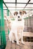Droevige Hond Royalty-vrije Stock Afbeelding