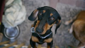 Droevige Hond Royalty-vrije Stock Foto's