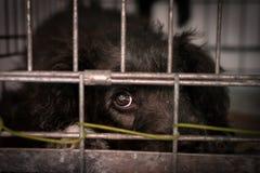 Droevige hond achter de tralies in een kooi stock foto's
