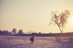 Droevige hond op het strand - uitstekende kleur Royalty-vrije Stock Afbeeldingen