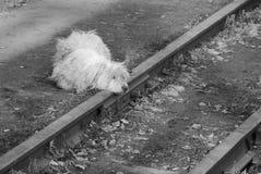 Droevige hond op spoorwegsporen Royalty-vrije Stock Afbeelding