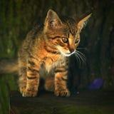 Droevige kat Stock Afbeelding