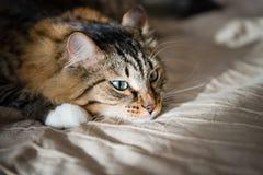 Droevige kat Stock Foto