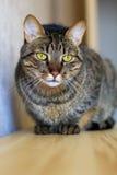Droevige kat Stock Fotografie