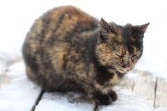 Droevige kat in wintertijd Royalty-vrije Stock Afbeeldingen