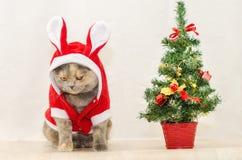 Droevige Kerstmiskat Stock Afbeeldingen