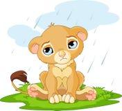 Droevige leeuwwelp stock illustratie