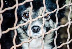 Droevige oude hond in de kooi van de schuilplaats voor dakloze dieren Stock Fotografie
