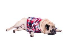 Droevige pug hond Royalty-vrije Stock Foto