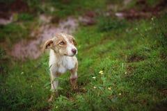 Droevige Straathond in Gras Royalty-vrije Stock Foto
