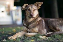 Droevige verdwaalde hond royalty-vrije stock afbeeldingen