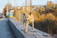 Droevige verdwaalde hond bij straat Stock Foto
