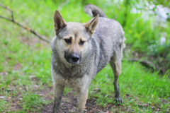 Droevige verdwaalde hond op straat Royalty-vrije Stock Afbeeldingen