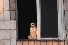 Droevige verdwaalde hond op straat Stock Foto's