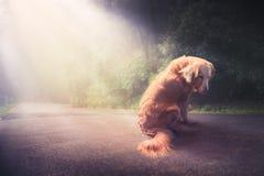 Droevige, verlaten hond in het midden van het contrast van weg/high imag royalty-vrije stock afbeelding