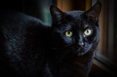 Droevige zwarte kat Royalty-vrije Stock Foto