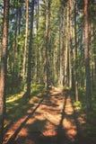 drogę na pieszą wycieczkę Obraz Royalty Free