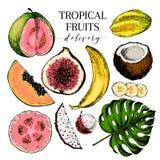 Drog exotiska frukter för vektor hand Inristade smoothiebunkeingredienser kulör symbolsset Tropisk söt mat Carambola vektor illustrationer