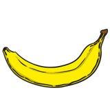 Drog frukter för banan isolerade handen vektorn Royaltyfri Foto