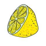 Drog frukter för citron isolerade handen vektorn Arkivbilder