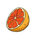 Drog frukter för grapefrukt isolerade handen vektorn Royaltyfria Bilder