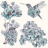 Drog kolibrier för vektor hand för design Royaltyfri Foto