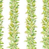 Drog sömlösa modellen för vattenfärgen lämnar förgrena sig handen med olik typ av gräsplan och Arkivbilder
