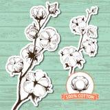 Drog stammar för vektor hand av bomullsväxter Royaltyfria Foton