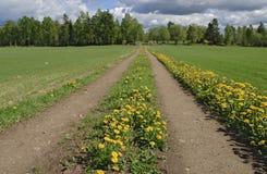 droga łąkowa Zdjęcie Royalty Free