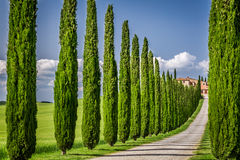 Droga agritourism w Tuscany z cyprysami Zdjęcie Stock