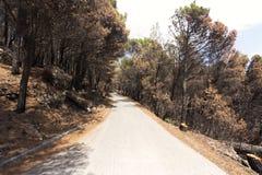 Droga biokovo góra Zdjęcia Royalty Free