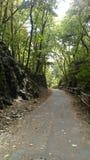 Droga dżungla Fotografia Stock